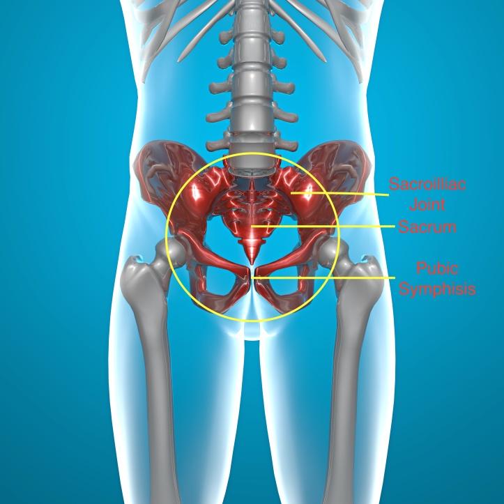 Pelvic Joints